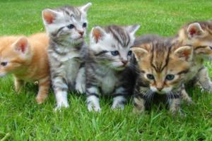 kittens-600x400